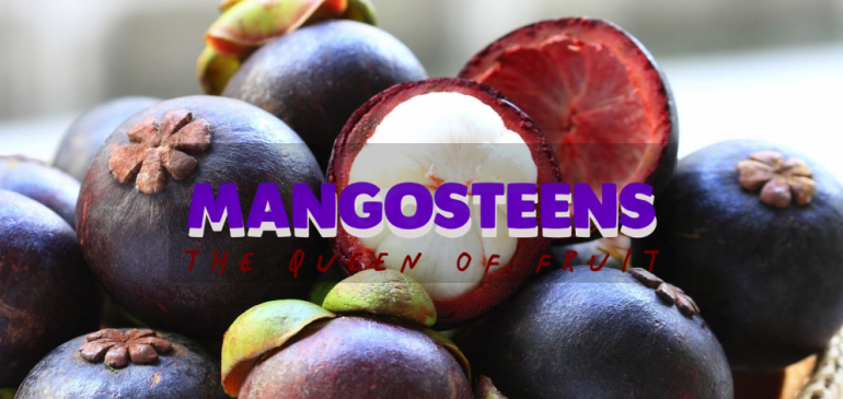 Long Live the Mangosteen, Long Live You