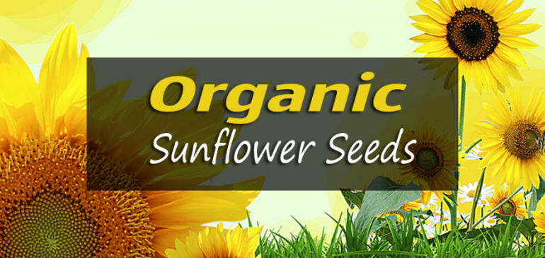 Organic Sunflower Seeds – Top 5 Benefits
