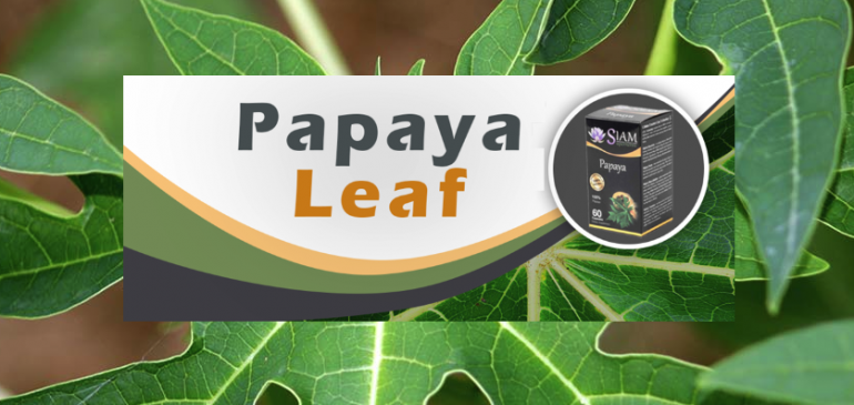 Top 5 Health Benefits of Papaya Leaf
