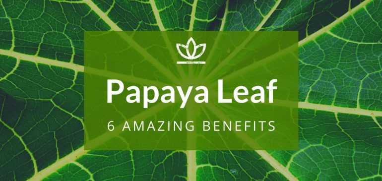 6 Incredible Benefits of Papaya Leaf